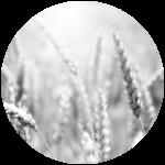 2015-Des Locaux Dédiés Aux Agriculteurs NB